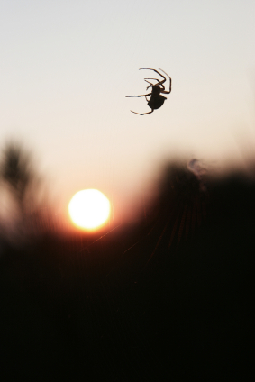 Black Widow Sunset